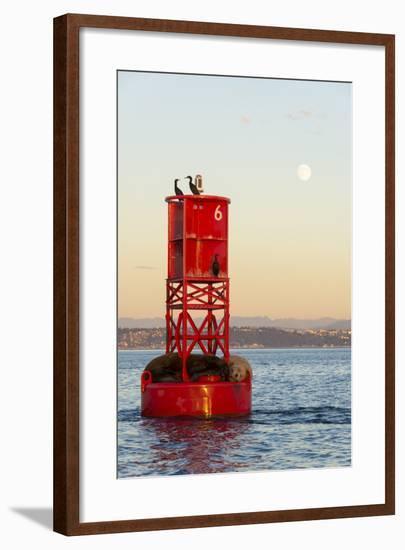 Washington, California Sea Lions and Cormorants. Full Moon-Trish Drury-Framed Photographic Print