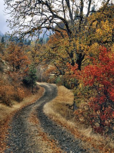 Washington, Columbia River Gorge. Road and Autumn-Colored Oaks-Steve Terrill-Photographic Print