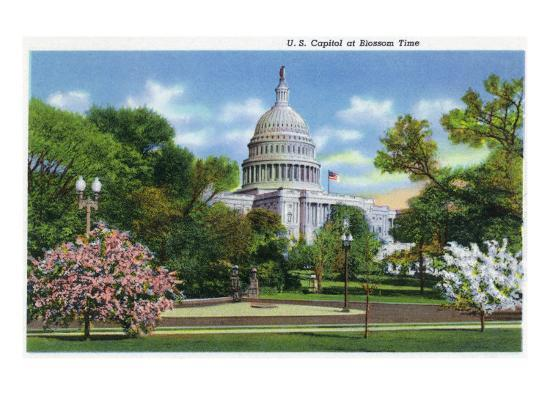 Washington DC, Exterior View of the US Capitol Building at Blossom Time-Lantern Press-Art Print