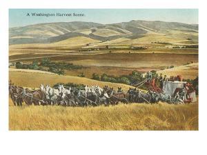 Washington Harvest Scene, Horse-Drawn Thresher