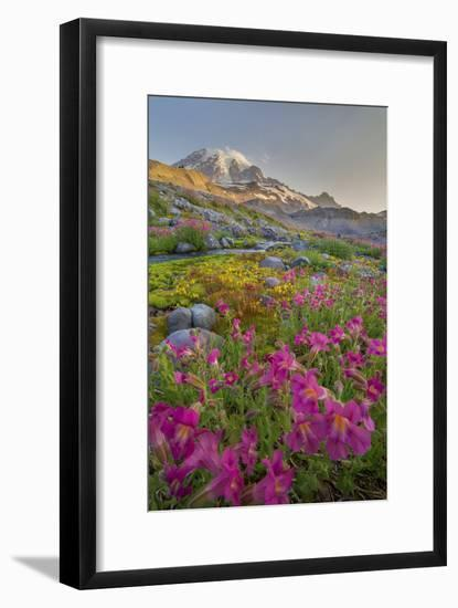Washington, Lewis's Monkeyflower Along Panorama Trail and Paradise River, Mt. Rainier National Park-Gary Luhm-Framed Photographic Print