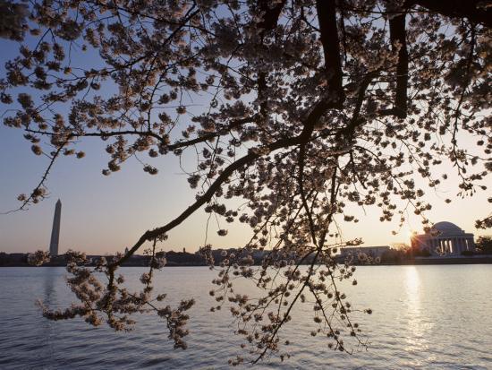 Washington Monument and Jefferson Memorial with Cherry Blossom Trees, Washington, D.C.-Kenneth Garrett-Photographic Print