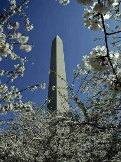 Washington Monument Seen Through Cherry Blossom Trees, Washington, D.C.-Kenneth Garrett-Photographic Print