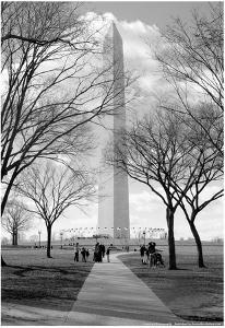 Washington Monument Through Trees