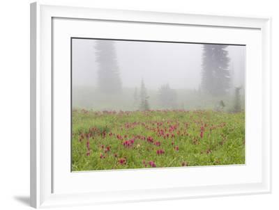 Washington, Mount Rainier National Park. Indian Paintbrush in Foggy Meadow-Jaynes Gallery-Framed Photographic Print