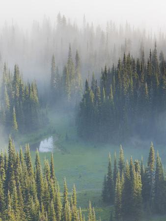 https://imgc.artprintimages.com/img/print/washington-mount-rainier-national-park-overview-of-surprise-lake_u-l-pu3f150.jpg?p=0
