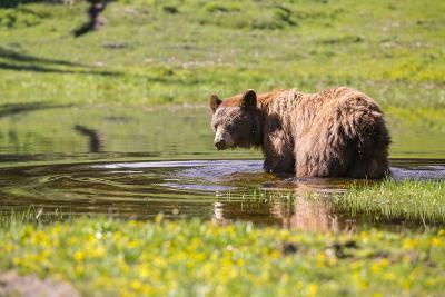 Washington, Mt. Rainier National Park-Gary Luhm-Photographic Print