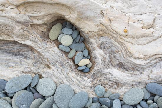 Washington, Olympic National Park. Beach Wood and Pebbles-Jaynes Gallery-Premium Photographic Print