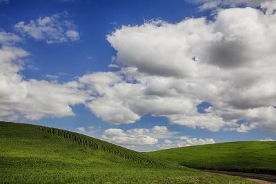 Washington, Palouse Country, Backroad Through the Green Fields of Washington-Terry Eggers-Photographic Print