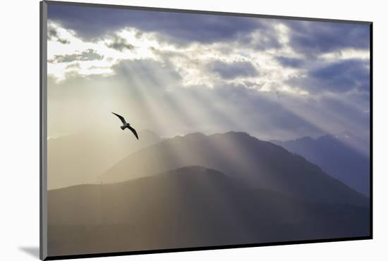 Washington, Seabeck. Seagull and God Rays over the Olympic Mountains-Don Paulson-Mounted Premium Photographic Print