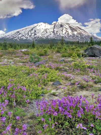 Washington State, Gifford Pinchot NF. Mount Saint Helens Landscape-Steve Terrill-Photographic Print