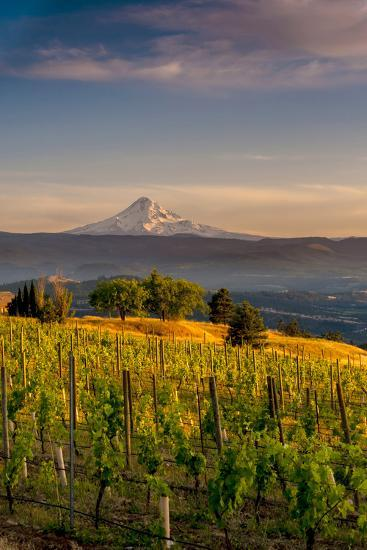 Washington State, Lyle. Mt. Hood Seen from a Vineyard Along the Columbia River Gorge-Richard Duval-Photographic Print