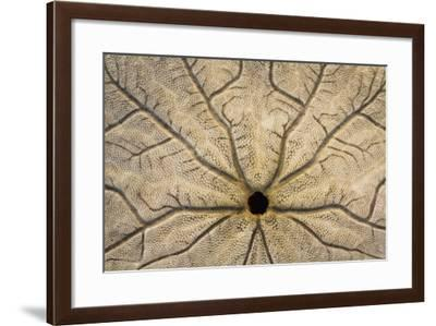 Washington State, Neah Bay. Design on Bottom of Sand Dollar Shell-Don Paulson-Framed Photographic Print