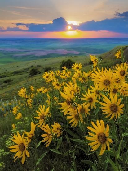 Washington State, Palouse Hills. Landscape with Douglas' SunflowersBy Don  Paulson - Washington State, Palouse Hills. Landscape With Douglas' Sunflowers