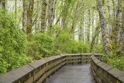 Washington State, Sandpiper Trail Boardwalk in Alder Tree Grove-Trish Drury-Photographic Print