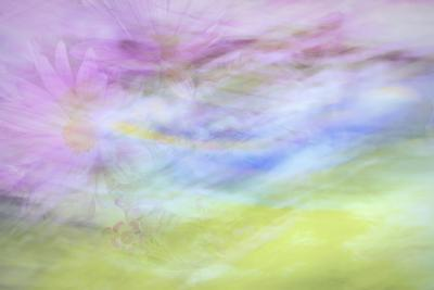 Washington State, Seabeck. Abstract of Flowers in Motion-Jaynes Gallery-Photographic Print
