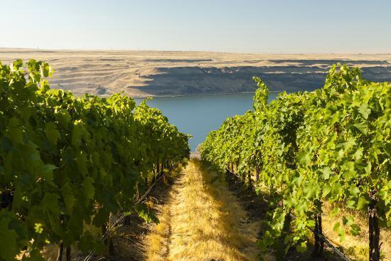 Washington State, Tri-Cities. the Benches Vineyards-Richard Duval-Photographic Print