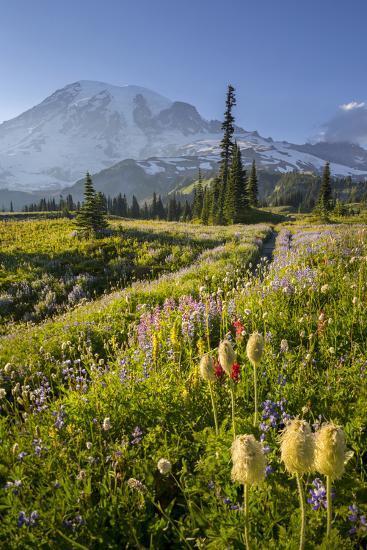 Washington, Subalpine Pasque Flower, Paintbrush and Lupine Wildflowers and Mt. Rainier-Gary Luhm-Photographic Print