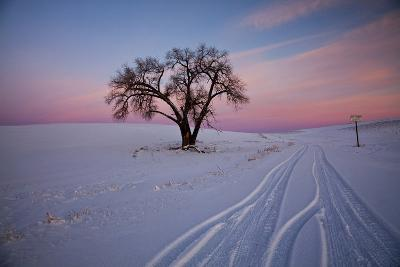 Washington, Sunset Bathed Lone Tree in Snow Covered Winter Field-Terry Eggers-Photographic Print