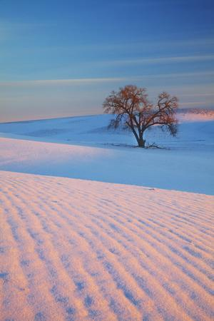https://imgc.artprintimages.com/img/print/washington-sunset-bathed-lone-tree-in-snow-covered-winter-field_u-l-q12t8x10.jpg?p=0