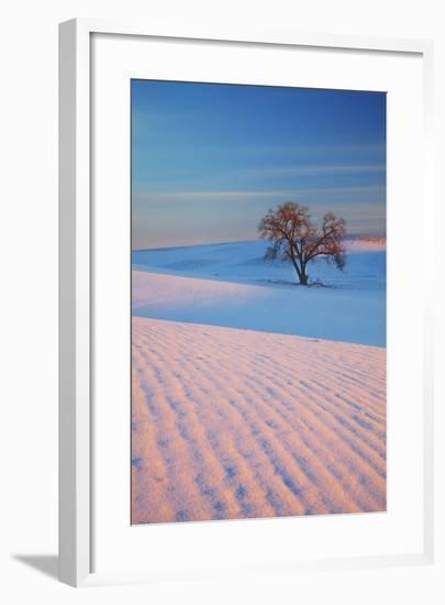 Washington, Sunset Bathed Lone Tree in Snow Covered Winter Field-Terry Eggers-Framed Photographic Print