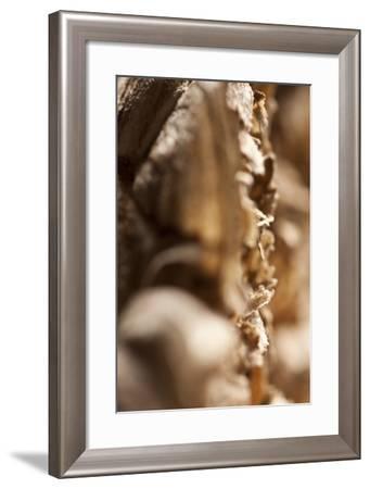 Wasp Nest-K.B. White-Framed Photographic Print