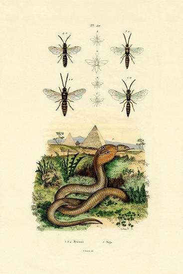 Wasps, 1833-39--Giclee Print
