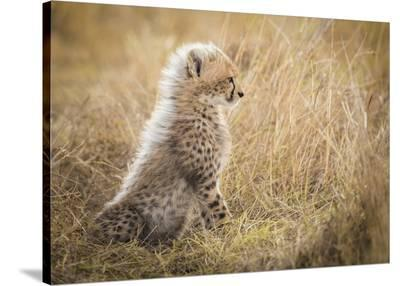Watching You Mom-Faisal Alnomas-Stretched Canvas Print