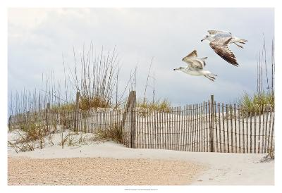 Water Bird Glimpse I-PHBurchett-Art Print