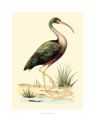 Water Birds I-Meyer H^l^-Art Print