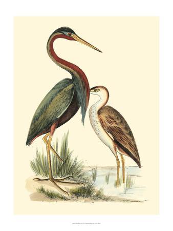 Water Birds III-Meyer H^l^-Art Print
