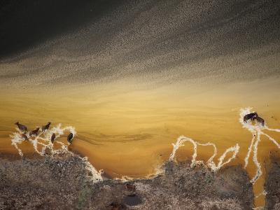 Water buffalo and mineral deposits along the shore of a crater lake.-Joel Sartore-Photographic Print