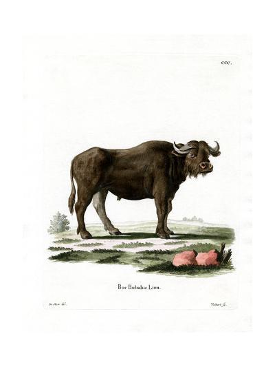Water Buffalo--Giclee Print