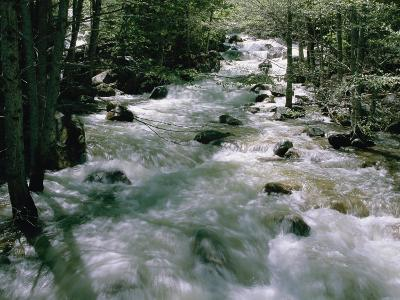 Water Cascading Down a Forest Creek-Marc Moritsch-Photographic Print