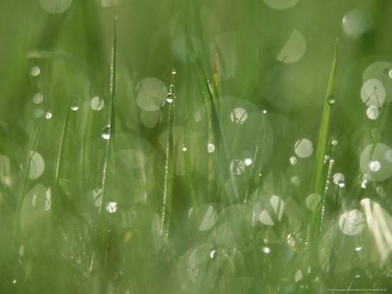 Water Droplets on Grass, Close-up Detail Yorkshire, UK-Mark Hamblin-Photographic Print