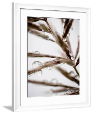 Water Droplets on Grass, Dali, Yunnan, China-Porteous Rod-Framed Photographic Print