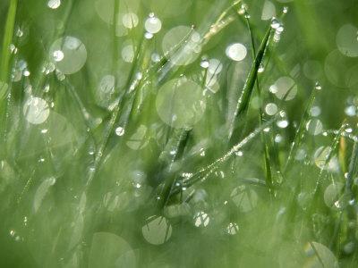 https://imgc.artprintimages.com/img/print/water-droplets-on-grass_u-l-q10qv070.jpg?p=0