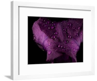 Water Drops on a Purple Flower in a Redwood Forest Habitat-Michael Nichols-Framed Photographic Print
