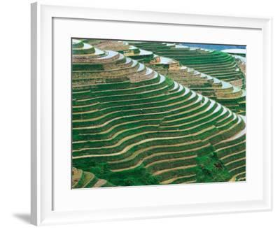 Water Field Rice Terraces in the Mountains, Long Ji, China-Keren Su-Framed Photographic Print