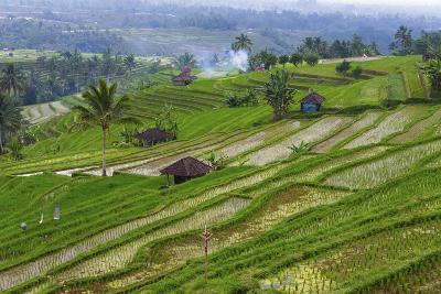 Water-Filled Rice Terraces, Bali Island, Indonesia-Keren Su-Photographic Print