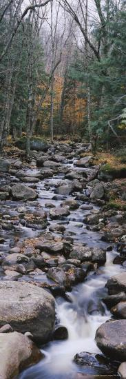 Water Flowing in the Forest, Adirondack Mountains, New York, USA--Photographic Print