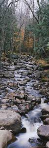 Water Flowing in the Forest, Adirondack Mountains, New York, USA