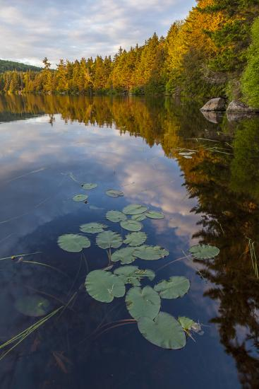 Water Lilies and Cloud Reflection on Lang Pond, Northern Forest, Maine-Jerry & Marcy Monkman-Photographic Print