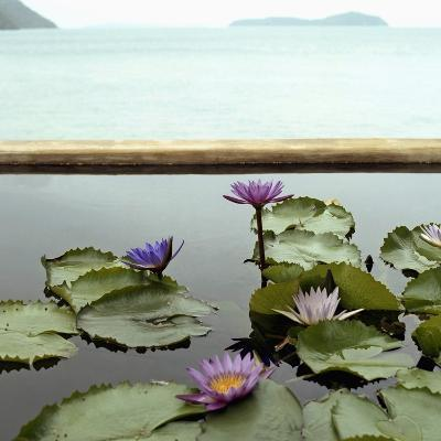 Water lilies in pond by ocean--Photographic Print