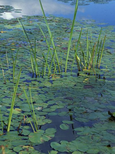 Water Lilies, New Hampshire, USA-Jerry & Marcy Monkman-Photographic Print