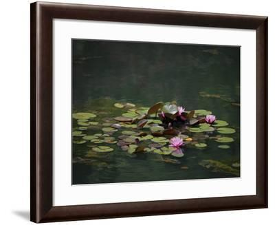 Water Lillies-J.D. Mcfarlan-Framed Photographic Print