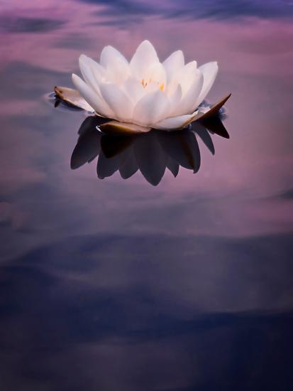 Water Lily On Dark Water-Mirja Paljakka-Art Print