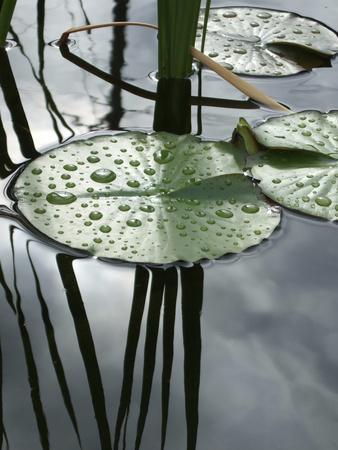 https://imgc.artprintimages.com/img/print/water-lily-pond_u-l-q10vo6a0.jpg?p=0