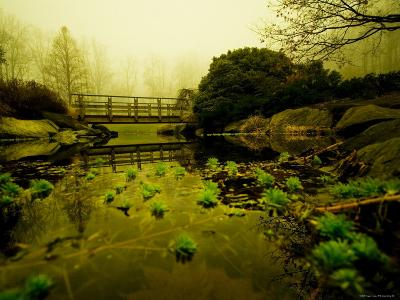 Water Plants Growing under Bridge-Jan Lakey-Photographic Print