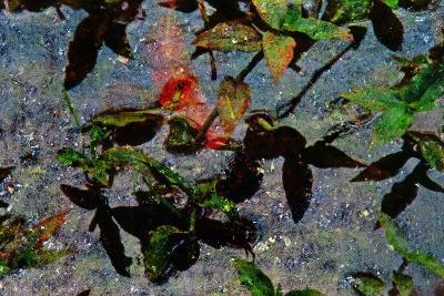 Water Plants-Andr? Burian-Photographic Print